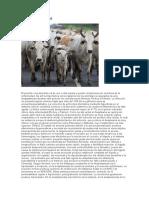 Importancia Vigilancia Animales Recuperados de Anaplasmosis