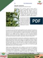 01. Nutricion Balanceada Del Aguacate