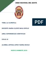 clorofila.docx