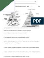 Trabalho Piramide Alimentar e funcional