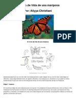 El Ciclo de Vida de Una Mariposa