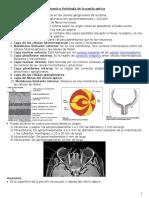 4. Anatomía y Patología de La Papila Óptica