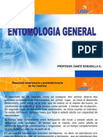 desarrollo embrionario insectos