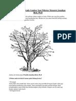 Arti Pohon Yang Anda Gambar Saat Psikotes Menurut Jonathan Rich