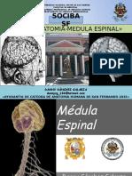 Medula Espinal 2015