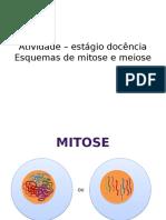 Mitose e Meiose ED - Esquemas