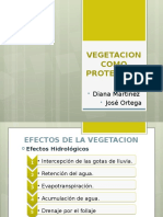 Vegetacion Como Proteccion