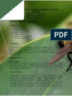 Familia Tachinidae