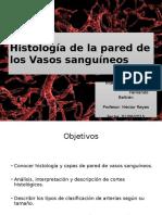 Histología Vasos Sanguineos (1).ppt