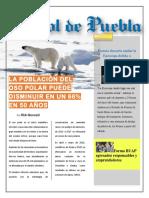 Periódico- Oso Polar
