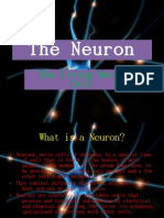 The Neuron (bigger slides)