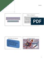 """The Neuron"" (bigger slides)"