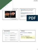 Mutaciones y Reparación Del ADN