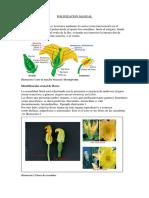 Polinizacion Manual