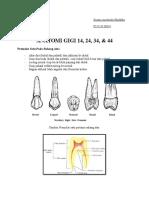 Anatomi Gigi Premolar