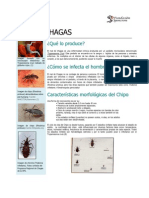 Boletín MAL DE CHAGA