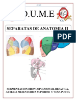 Segmentacion Broncopulmonar, Hepatica, Arteria Mesenterica Superior y Vena Porta