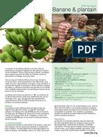 Plantin-Banane & Plantain