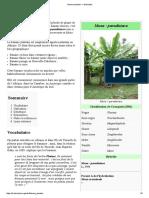 Plantain — Wikipédia