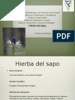 Hierba Del Sapo