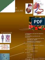 07.Sistema Cardiovascular