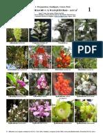 Guía de Orquídeas de Wayquecha - ACCA