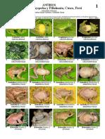 Guía de Anfibios de Wayqecha, Acjanaco y Pillahuata