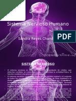 Tarea 2, anatomofisiologia, iacc