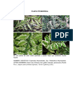 PLANTA PITOMORREAL.pdf
