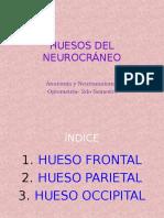 expo  frontal occipital parietal anita.ppt