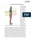 Cutaneous Part of Meridians