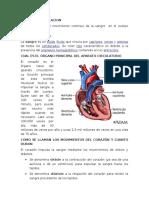 Preguntas Sistema Circulatorio