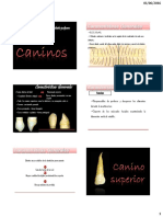 Caninos.pdf