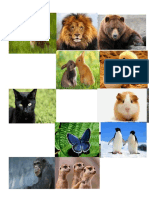 Animales Cata
