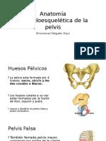 Pelvis Osea Obste.