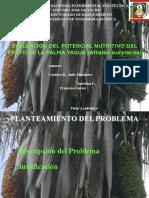 Presentación Palma Yagua