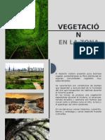 Vegetación en la arquitectura
