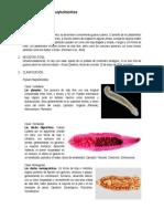 M. Platyhelminthes