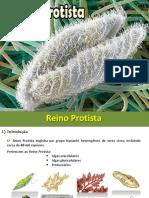 Reino_Protista.pdf