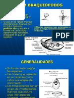 Braquiopodos PDF