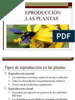 reproduccion plantas