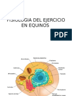 Fisiologia Del Musculo en Equinos Power Point