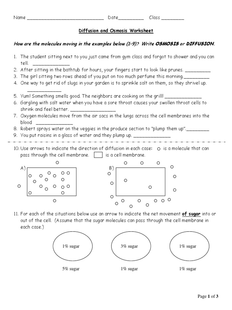 Cell Membrane Transport Worksheet (Osmosis, Diffusion) | Cell ...