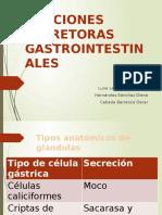funcionessecretorasgastrointestinales-140522220536-phpapp02