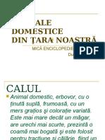 animale Domestice Din Tara Noastra