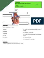 Ava Sis Cardiovascular e Sangue2bim