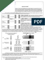Guía 3 - Replicación del DNA- 4ºCHA - 2010