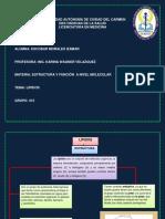 UNIVERSIDAD AUTÓNOMA DE CIUDAD DEL CARMEN.pdf