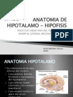 Anatomia de Hipotalamo Hipofisis y Nucleos cos