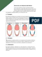Capitulo 4 anatomia